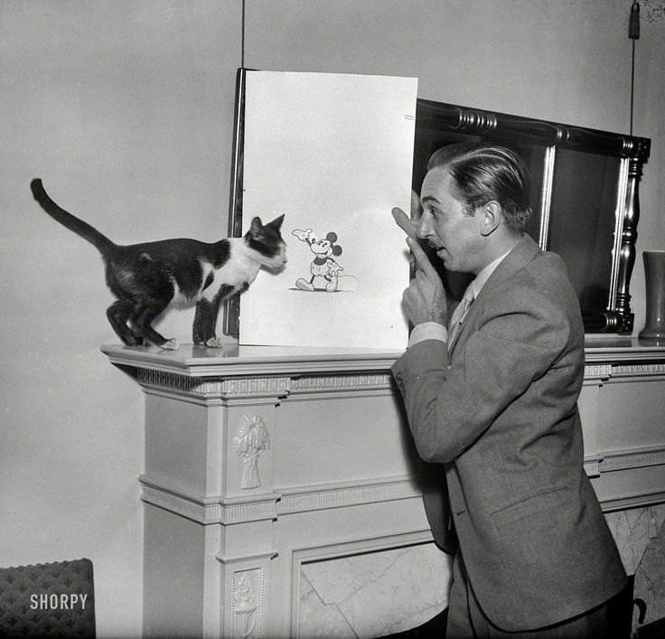 "Washington, D.C., circa 1931. ""Walt Disney with Mickey Mouse drawing."" One day he'll be bigger than you, cat! Harris & Ewing glass negative...."