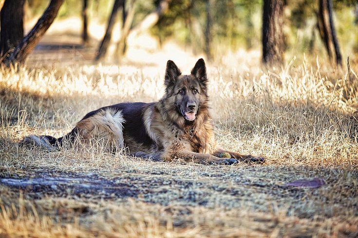 Guauquefoto, fotografia de mascotas