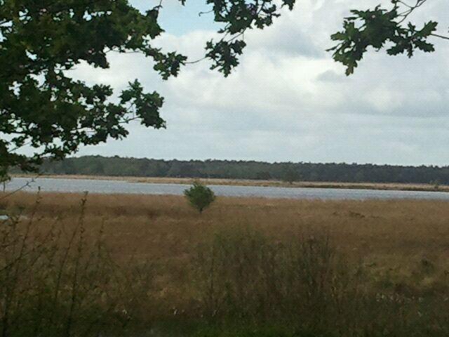 Nationaal Park Dwingelderveld in Ruinen, Drenthe