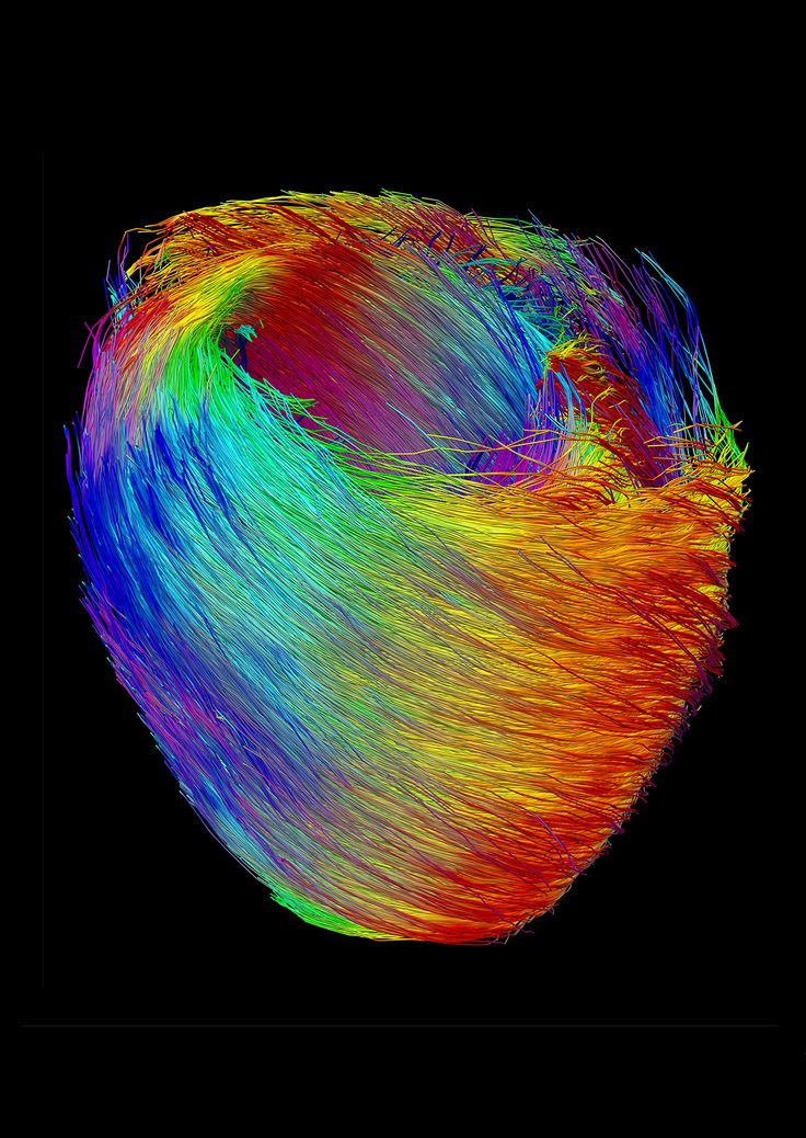A colourful image of muscle fibres, which shows how a heart beats, is on display…