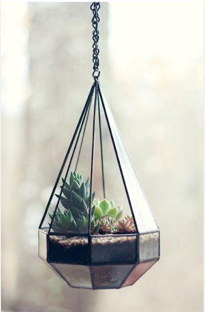 Suspended terrarium.