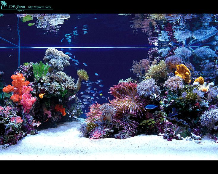 Anyone Interested In Modern Reef Aquariums Should Go Through This Reef  Central Thread .