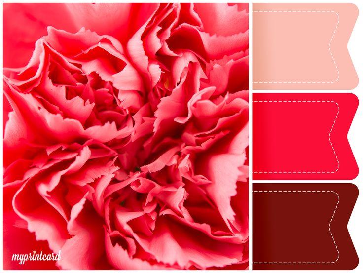 Eine Hochzeitsfarbe, die voll im Trend 2016 liegt, ist die Farbe Rot. Dieses Moodboard inspiriert Euch zu Eurem Farbkonzept für die Sommerhochzeit mit saisonalen Sommerblumen. Hier die rote Nelke.  #red #rot #hochzeitsfarben #wedding #hochzeit #farbkonzept #moodboard #weddingcake #weddingstationary #apero #sektempfang #hochzeitstorte #brautstrauß #blumendekoration #farben