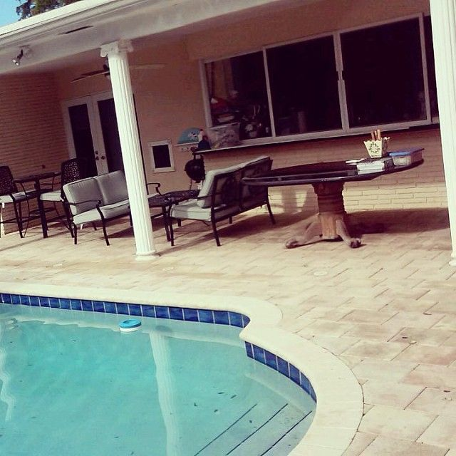 Power Washing And Cleaning Services Call Or Text 954 980 0454 Powerwash Pressurewash Sidewalk Roof Rustremoval In 2020 Gum Removal Pool Area Wide Mouth Glass Jars
