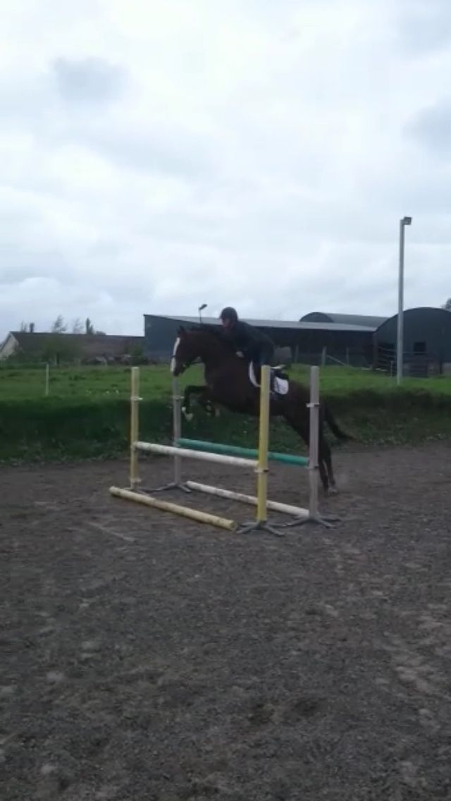 Jaffa,16.1hh 4 yr old gelding by Killea Hill View. From the family of Tubber Rebel and Finnsky Hill.
