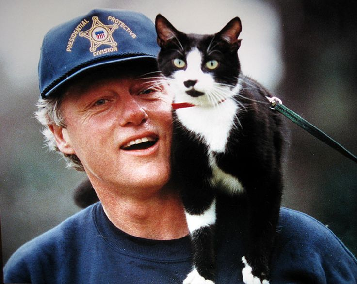 From Lincoln to  Reagan and Clinton, cats have lived with their humans at the White House. For more on this, visit Paws for Reflection at www.bjbangs.net