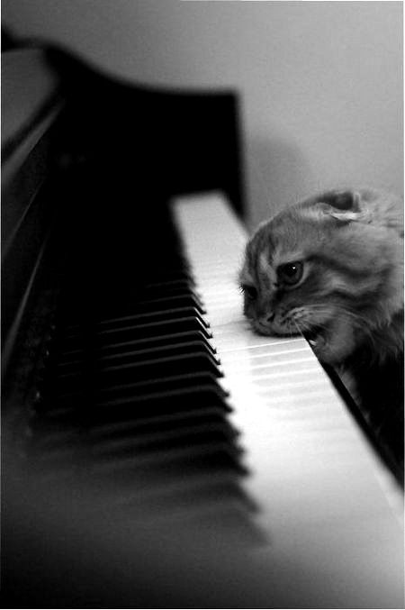 Ever wondered what the cat is doing when you're not home after you've just decided to take up the piano? (gonna destroy that noise maker!)
