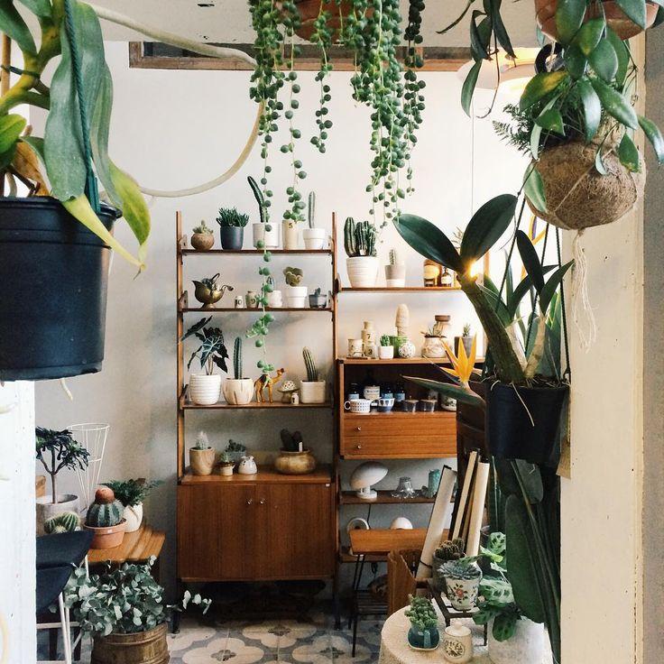 Pingl par bug rug sur les plantes pinterest plantes for Plante interieur appartement