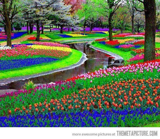 170 best Rainbow by Antoni Azocar images on Pinterest | Rainbow ...