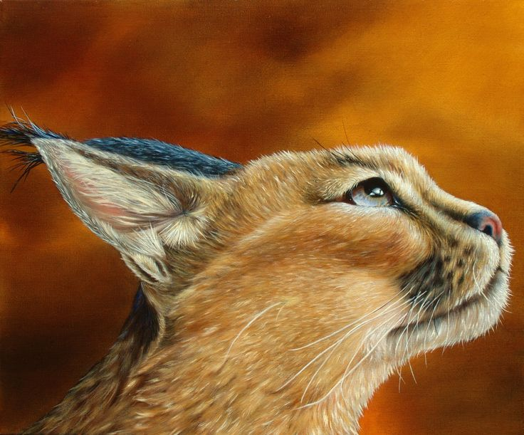 WHAT'S UP - Caracal, oil on canvas, 50x60