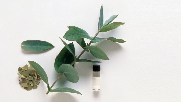 10 things you should be cleaning with eucalyptus oil