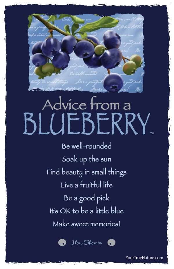 Advice from a Blueberry | Quotes ~ Advice from....Ilan ...