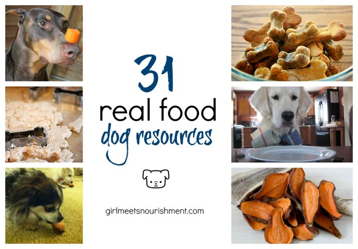 31 Real Food Dog Resources - Girl Meets Nourishment Pinned by www.minivanmaverick.com