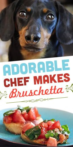 Adorable Chef Makes Bruschetta! #video #dogs #cooking #funny