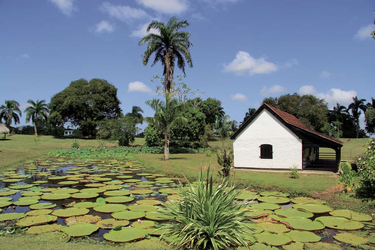 Suriname I have been here.