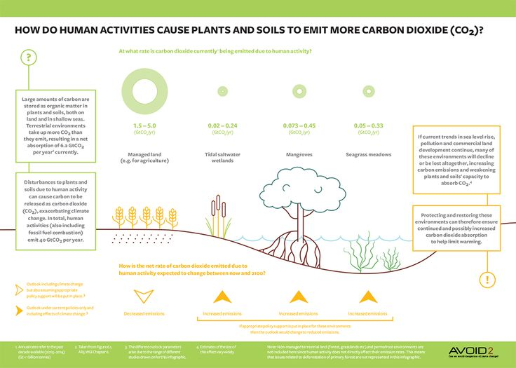 Carbon sequestration infographic