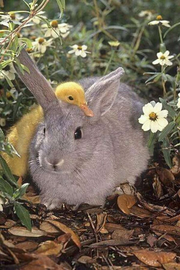 Happy Easter everybunny! Hope it's all it's quacked up to be!