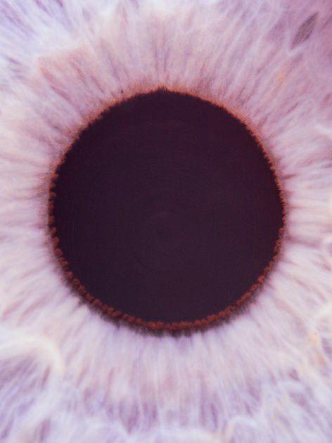 : Black Hole, Pupil, Iris, Pink, Drawers, Eyeglasses, Flower, Photography, Eye Glasses