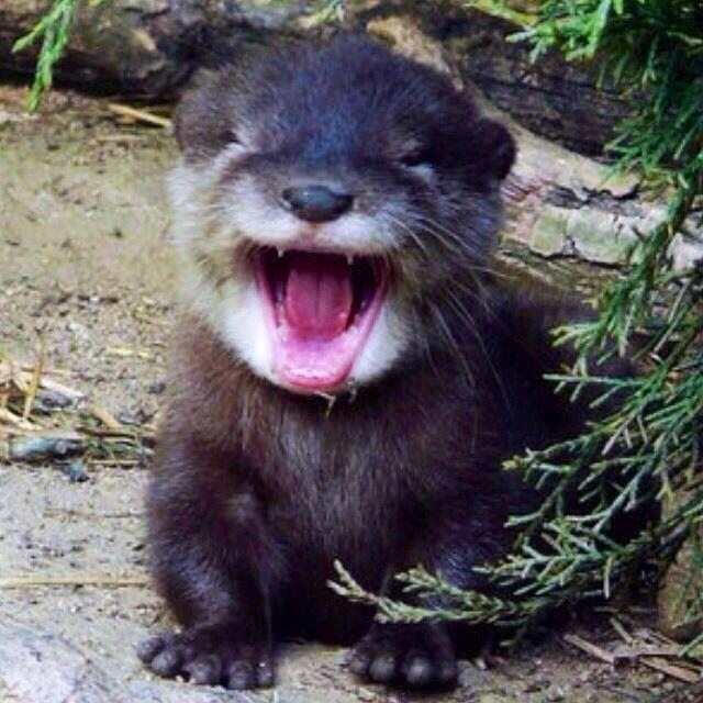 Gerrrrrr... I'm Ferocious. Hehehe just kidding.