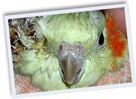 73 best images about blind cockatiel on Pinterest