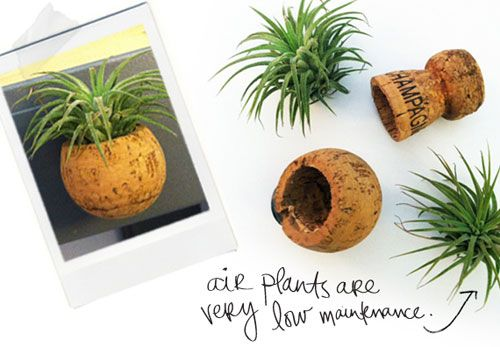DIY-Itty-Bitty-Planters.jpg: Minis Plants, Corks Planters, Crafts Ideas, Wine Corks, Airplant, Air Plants, Tiny Planters, Corks Crafts, Champagne Corks