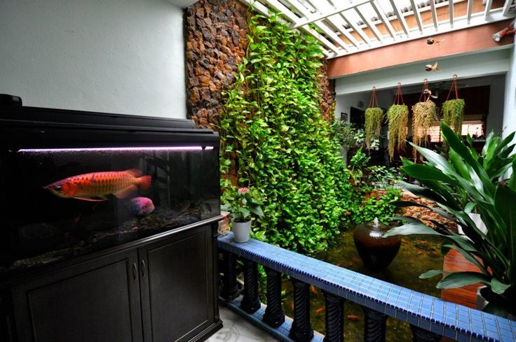 17 best images about fish room on pinterest vivarium for Koi pond inside house