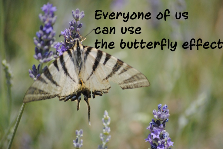 Small business projects cretated with passion use the butterfly effect and finally they are no small any more.
