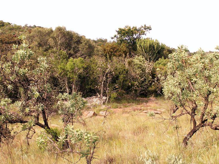 paysage du bushfeld