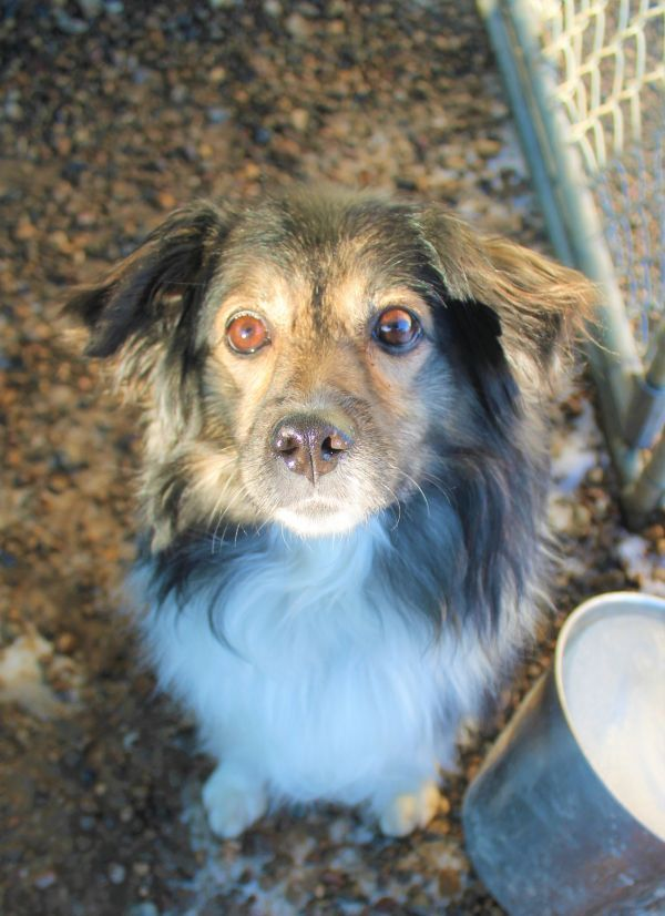 Dogs For Adoption Near Chestermere Ab Petfinder Dog Adoption Help Homeless Pets Shepherd Mix Dog