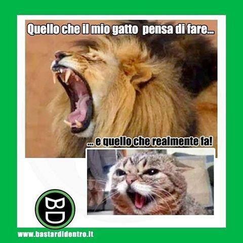 Cosa crede il tuo #gatto ? Smontalo mostrando questa immagine! Tagga i tuoi amici e #condividi #bastardidentro #leone www.bastardidentro.it