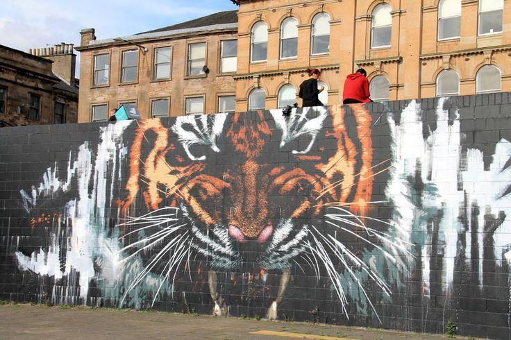 Street Art Glasgow - Tygrys, autor: Klingatron & Art Pistol