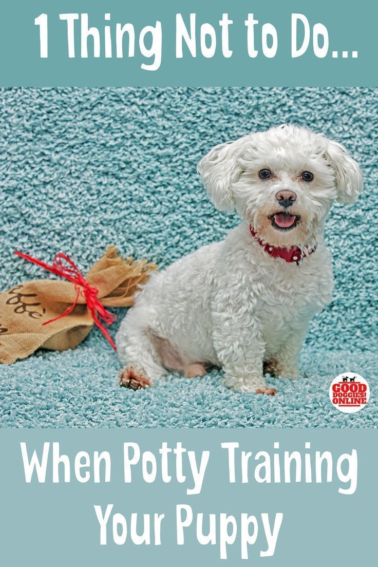 The 1 Thing Not To Do When Potty Training Your Puppy Good Dog