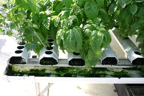 Container garden hydroponics plants pinterest gardens chili and hydroponic systems - Hydroponic container gardening ...