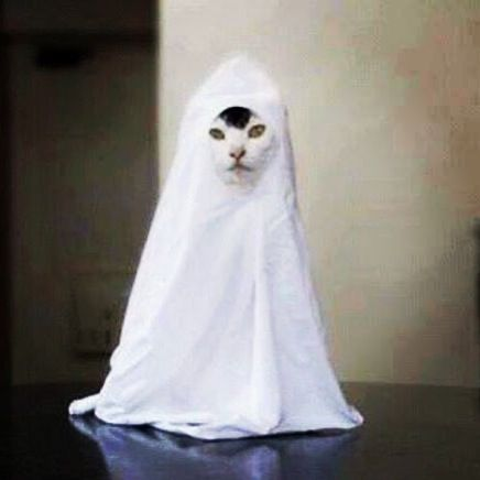 BOO ! The Ghost Cat ) LOL ) Halloween Costume | Cats | Pinterest | Cats Costumes and Ghosts