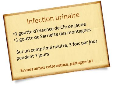 sarriette des montagnes infection urinaire