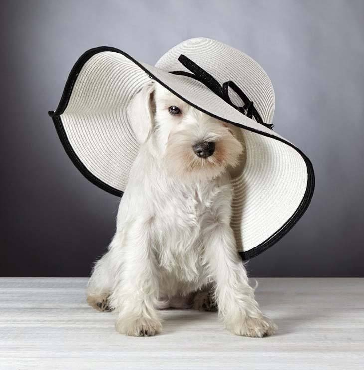 If you're the lucky owner of one of these dogs, you'll love these Miniature Schnauzer names for your male or female.