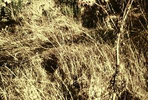 """""""wind"""" smashbrainzeros deviantART gallery"""