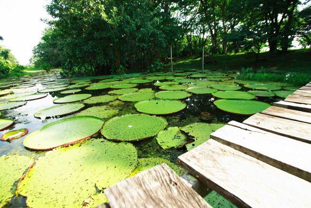 Parque Natural Amacayacu, Amazonas