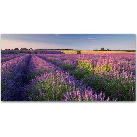 Trademark Fine Art Pink & Purple Canvas Art by Adam Burton, Purple