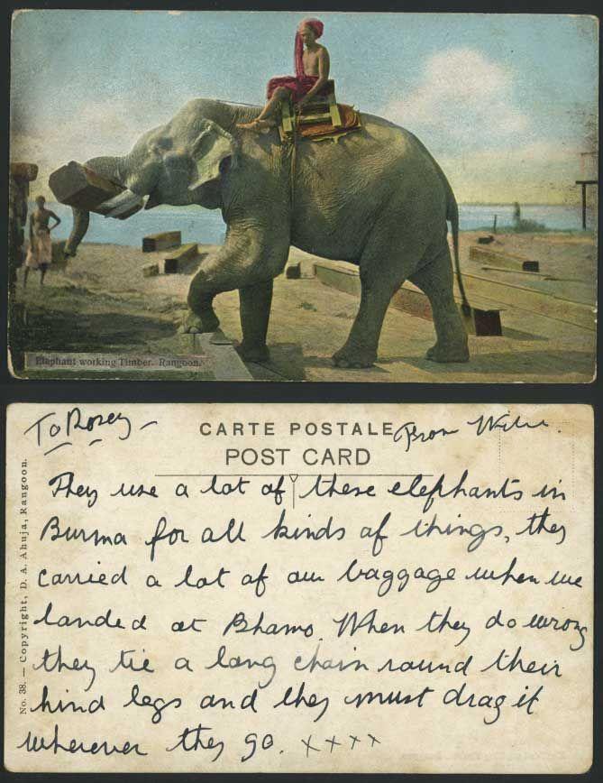 elephant working timber, rangoon