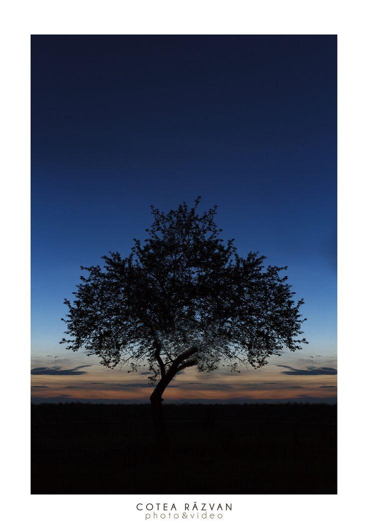 Alone  #apus #landscape  #fotograf #silueta http://www.cotearazvan.ro/ https://www.facebook.com/cotearazvanfotograf https://www.facebook.com/fotonuntabucuresti/ http://fotografnunta.info/