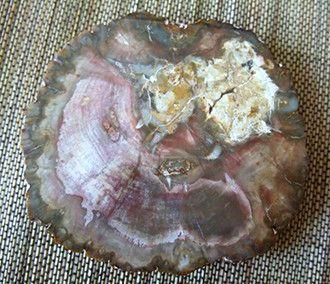 Bois pétrifié, coupe transversale d'une branche. 225 millions d'années... Hier c'était du bois, aujourd'hui c'est une pierre !