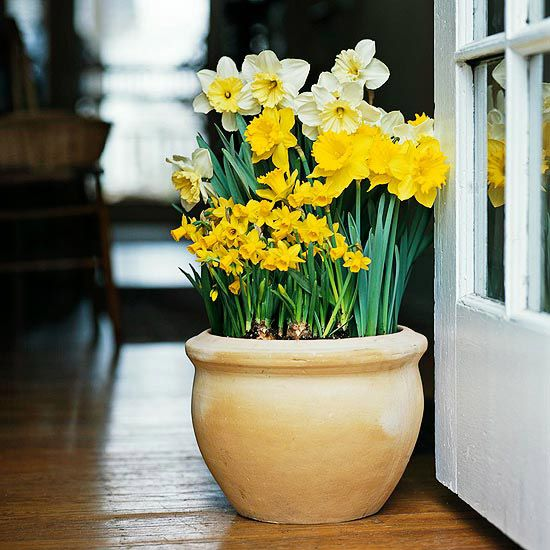 Design Idea: Try Them in Containers-Most bulbs do just as well in containers as they do in the ground. Create pots of spring joy with your favorite tulips, daffodils, and hyacinths by sinking them in the ground so they get winter cold or storing the containers in a cold garage or storage shed. When the bulbs fade, replace them with warm-weather favorites such as callas, cannas, or caladiums for summer-long beauty.