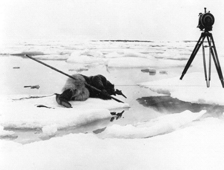 Nanook of the North (1922) - Robert J. Flaherty