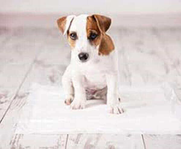 How To Potty Train A Puppy On Pads To Go Outside Fast A Dog