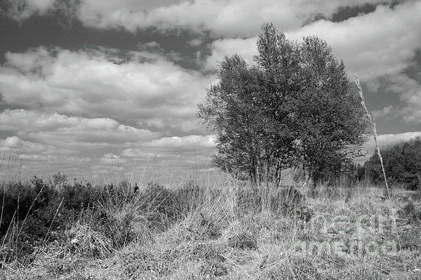National park Dwingelderveld, Netherlands. Black and White.