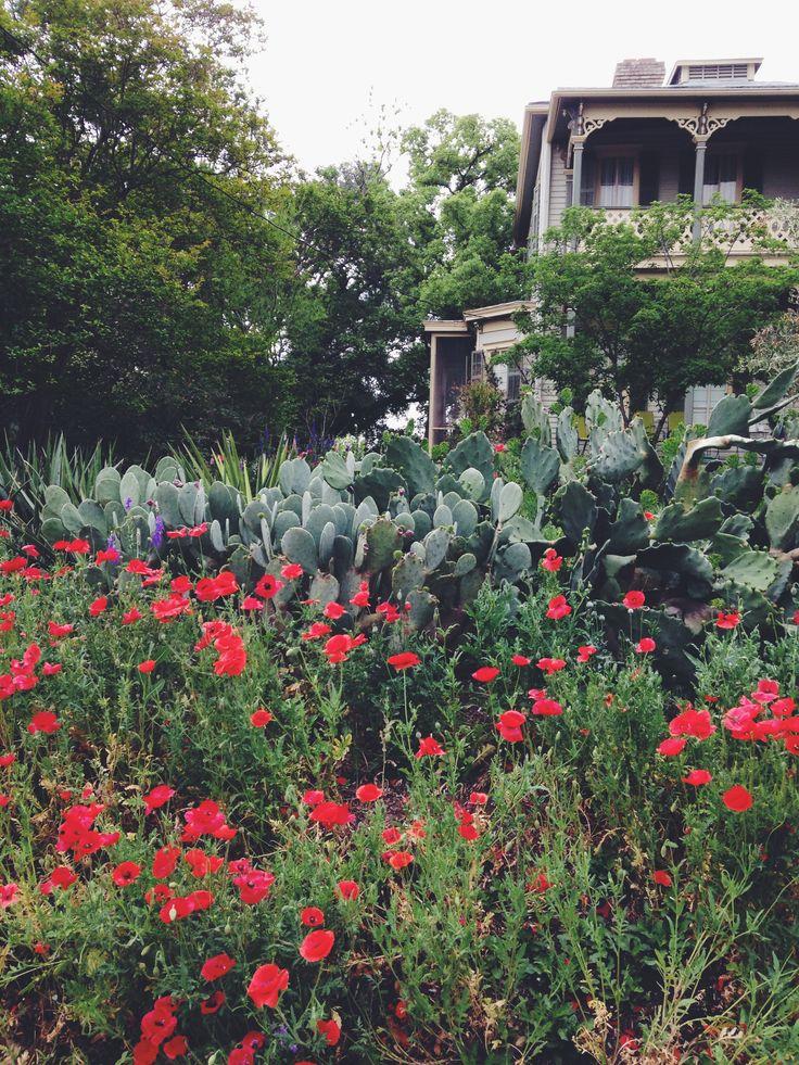 Clarksville home, Austin, TX Garden, Exterior, Plants