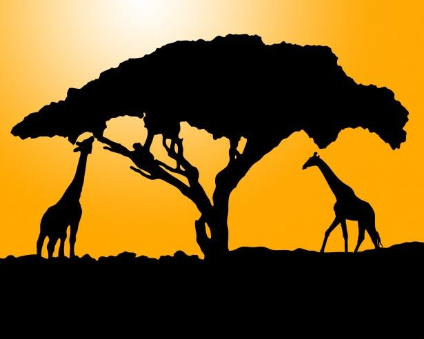 Giraffe Silhouette At Sunset Free Stock Photo - Public Domain Pictures
