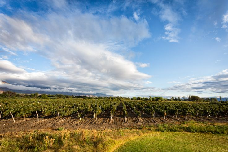 The grapes of La Estancia de Cafayate are amongst the highest quality grapes in the region