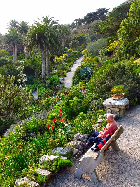 Tresco Abbey Gardens in the Scilly Isles.  The only place in the UK where you will see mature date palms.